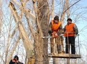 Пилим деревья любой сложности. г.Алматы