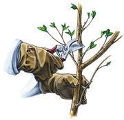 Санитарная обрезка деревьев, кронирование, снос, формоввочная обрезка.