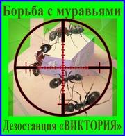 Дезостанция«ВИКТОРИЯ»,  уничтожение  муравьёв в Алматы и области.