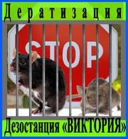 Дезостанция«ВИКТОРИЯ»,  дератизация (уничтожение грызунов) в Алматы и области.