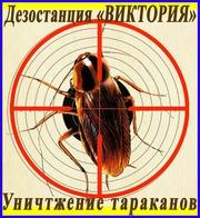 Дезостанция«ВИКТОРИЯ»,  уничтожение,  тараканов в Алматы и области.