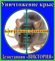 Дезостанция«ВИКТОРИЯ»,  уничтожение  крыс в Алматы и области.