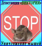 Дезостанция«ВИКТОРИЯ»,  уничтожение  мышей в Алматы и области.