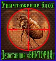 Дезостанция«ВИКТОРИЯ»,  уничтожение  блох в Алматы и области.