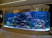Аквариумы на заказ. Все для аквариумов морских и пресноводных