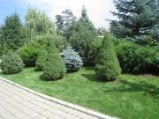 Озеленение. Ландшафтный дизайн.
