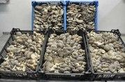 Ищу инвестора для создания грибного производства