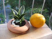 Миниатюрная сансевиерия ханни,  4 растения горшке.