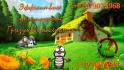 Уничтожение насекомых и грызунов,  (клопы,  тараканы,  блохи,  крысы и тд.